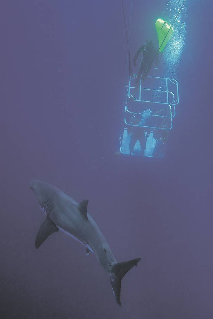 Shark-diving rattles human rights advocates | City Press