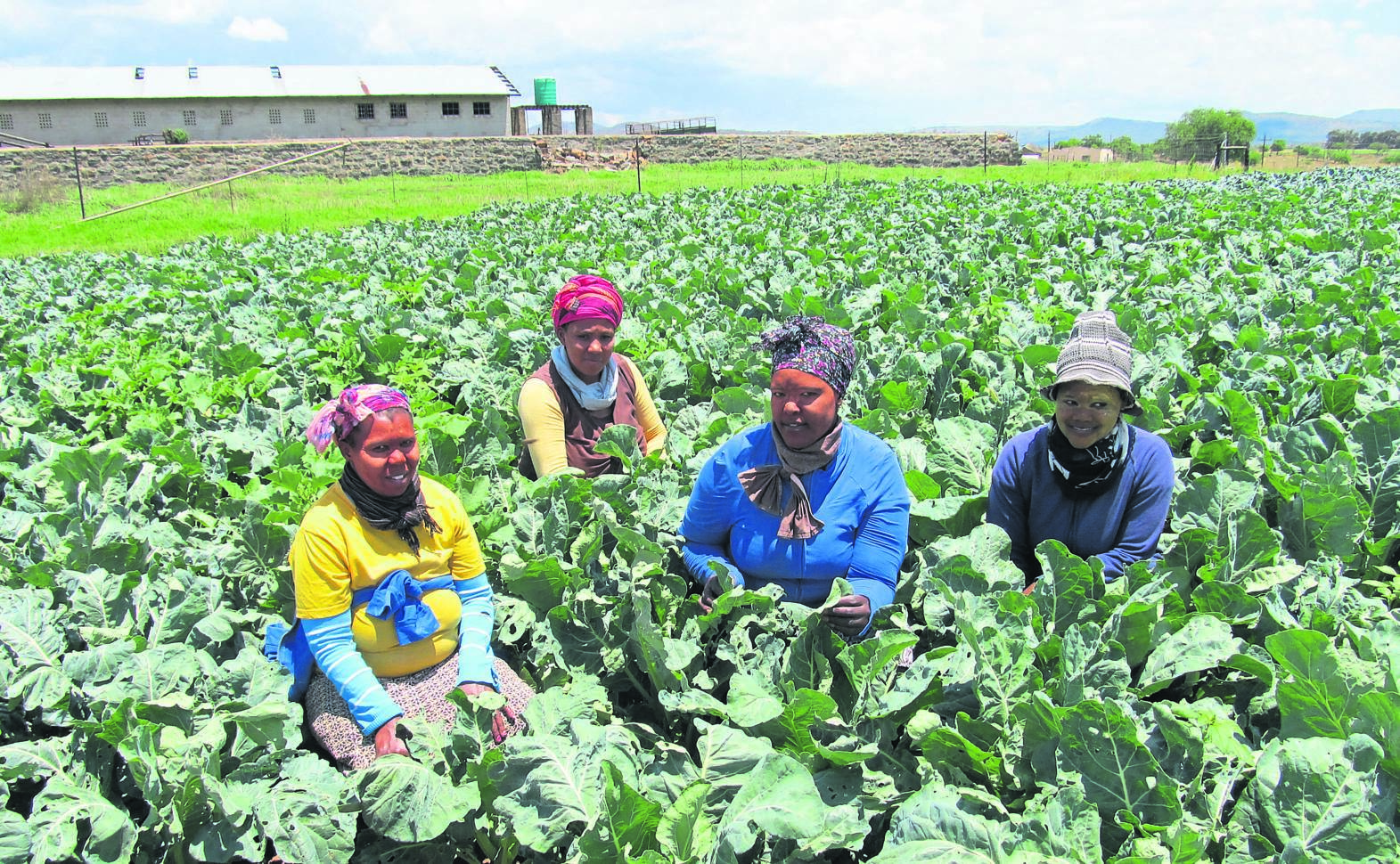 Beneficiaries: from left, Nomusa Dlamini, Nompendulo Dlamini, Thandeka Nene and Nosipho Dladla, harvest broccoli at the Gugulethu Farm in Mooi River,