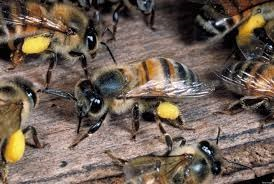 PHOTO: sourced  Bees