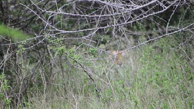 The tiger that was killed yesterday after it escaped from the Lion Park on Wednesday afternoon, sits on the property of a neighbouring farmer.