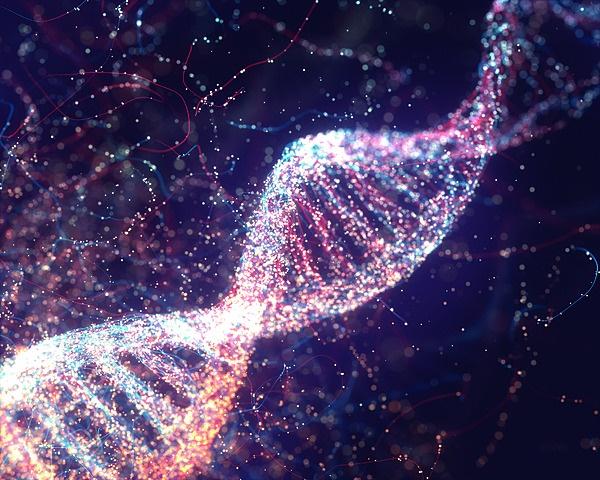 'n Stuk DNS is in segmente verdeel wat chromosome