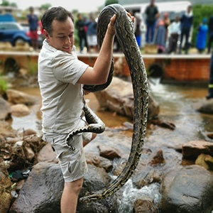 Snake catcher Nick Evans and the 3.3m pregnant python he rescued from Molweni.