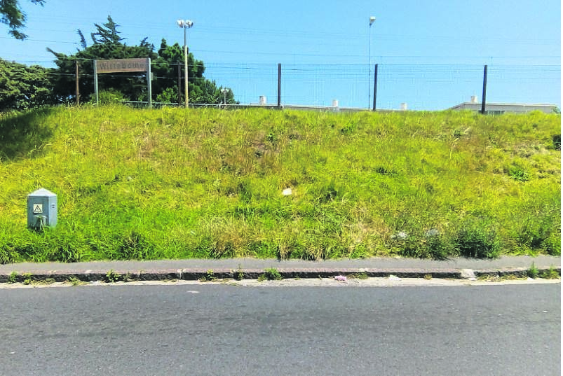 The overgrown road verge leading up to Wittebome Station in Wynberg before it was removed by the City on Wednesday 13 November.