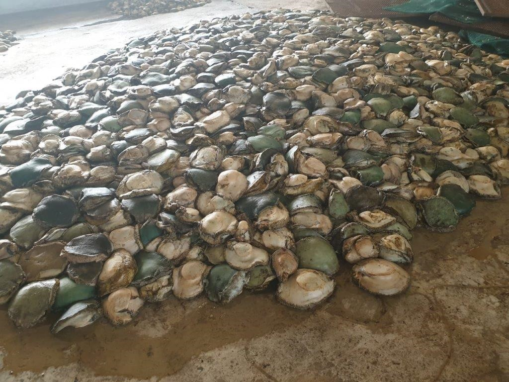 Disciplinary hearing clears high-ranking fisheries official accused of multimillion-rand abalone theft - News24