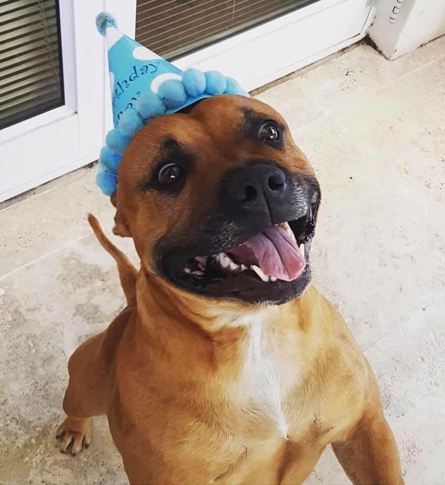 Zeus op sy derde verjaardag, voordat hy weggeraak