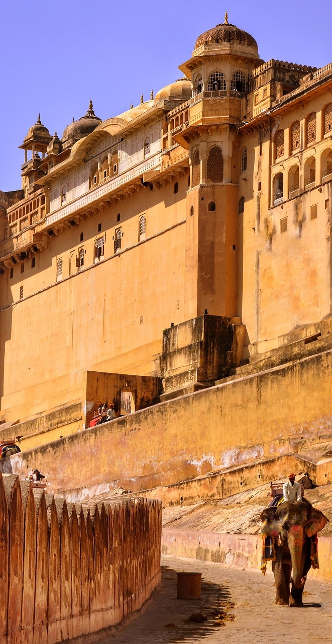 donkey in front of amer fort near jaipur