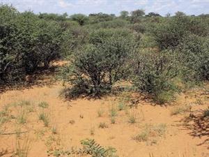 Herlewingslandbou: Bosindringing veeboer se groot vyand