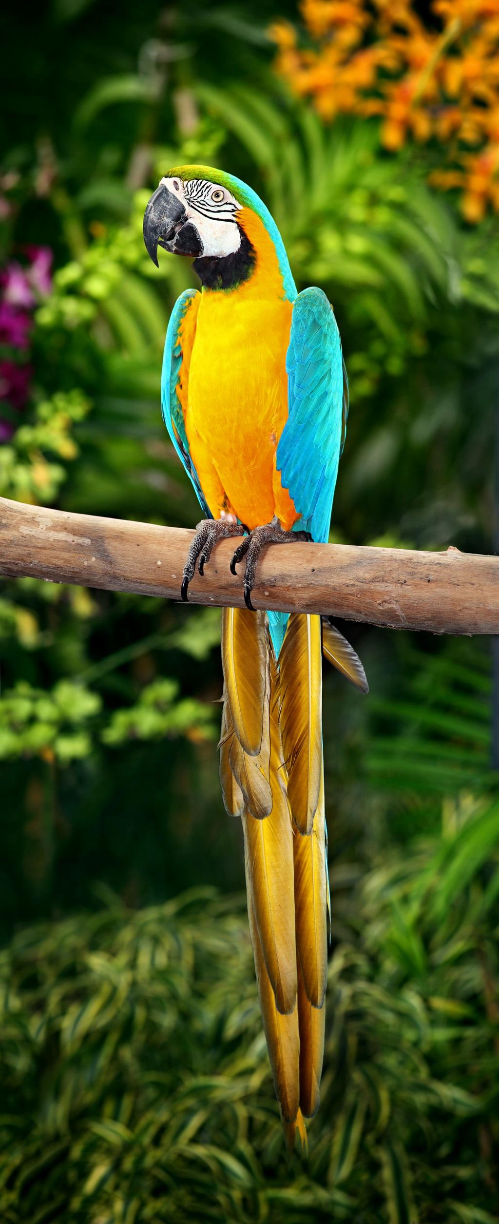 Aras is kleurvolle papegaaie. Foto: Gallo Images/Getty Images