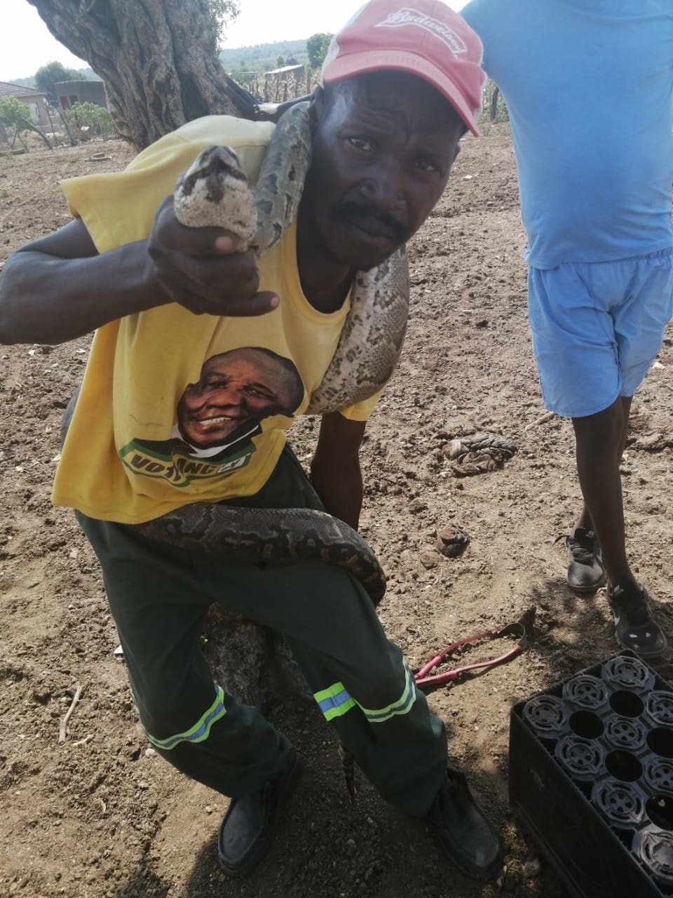 Chemist Lebea carrying a dead snake which attacked