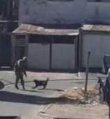 Lockdown: Who shot Bonzo? SANDF denies shooting dog - News24