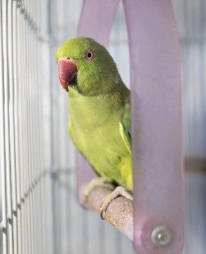 Parrot Hailed Hero After Saving Family From House Fire You
