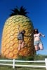 Giant Pineapples in the Summer Sun!