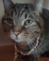 My cat Licorice, all blinged up!