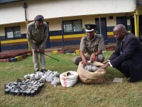 Nyandarua North Police boss, Benjamin Onsongo accompanied by other senior police officer inspects a consignment of bhang netted from a suspect in Nyahururu, Agostino Village. The bhang was worth KES 500,000 in which a suspect believed to be the major supplier in Nyahururu Town and its environs was arrested.